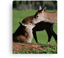Mum& Doe Canvas Print