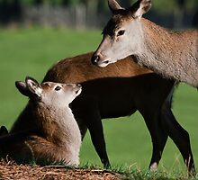 Doe & Young  by Elaine123