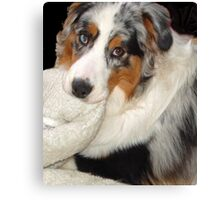 Cezanne Blue and his Blankie Canvas Print