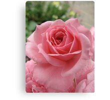 Rose Avalanche Canvas Print