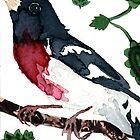 Pheucticus ludovicianus (Rose-Breasted Grosbeak) by Carol Kroll