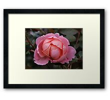 All in Pink Framed Print