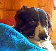 Cozy Boy Odin by Diane  Kramer