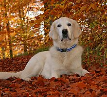 Ditte in the golden leaves by Trine