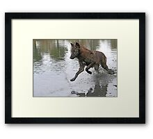 Making a splash, wolf style Framed Print