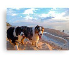 Odin and Cezanne Blue walk Lake Michigan Canvas Print