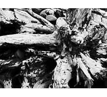 Starburst Stump Photographic Print