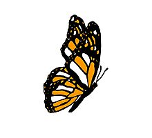 Orange Monarch Butterfly Photographic Print
