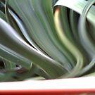 squigly leaf by nutchip