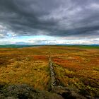 Open Moorland by taffspoon