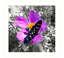 Flower and Butterfly Art Print