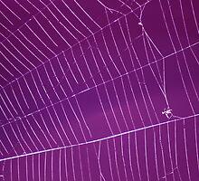 The Web by shortarcasart