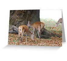 Deer Deer Greeting Card
