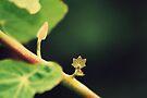 Tree star by Joshua Greiner