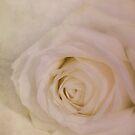 Snowwhite Queen by Priska Wettstein