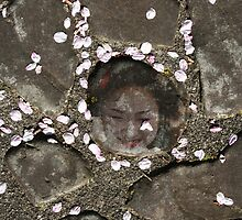 Sakura tears by Jenny Hall