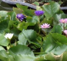 Water Flowers Sticker