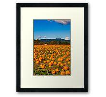Pumpkin Patch Framed Print