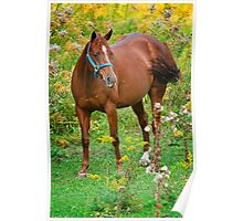 Horse in Field Poster