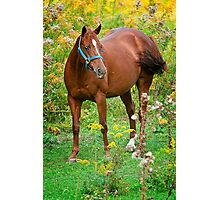 Horse in Field Photographic Print