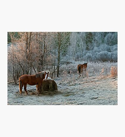 Frosty Morning Photographic Print