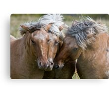Horse Lords Metal Print