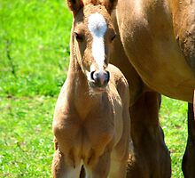 At Mother's Side by AngieDavies