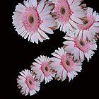 Pink Daisy Dance by Mistyarts