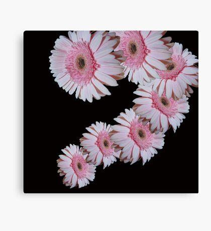 Pink Daisy Dance Canvas Print