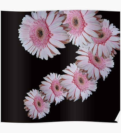 Pink Daisy Dance Poster