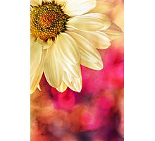 Daisy - Golden on Pink Photographic Print