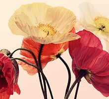 Posing Poppies by micklyn