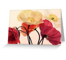 Posing Poppies Greeting Card