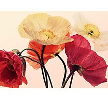Posing Poppies Photographic Print