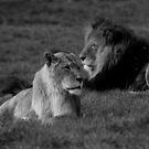 The Lion Sleeps Tonight by Mandy Kerr
