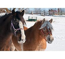 Equine Friends Photographic Print