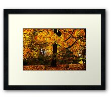 New England Maple Framed Print