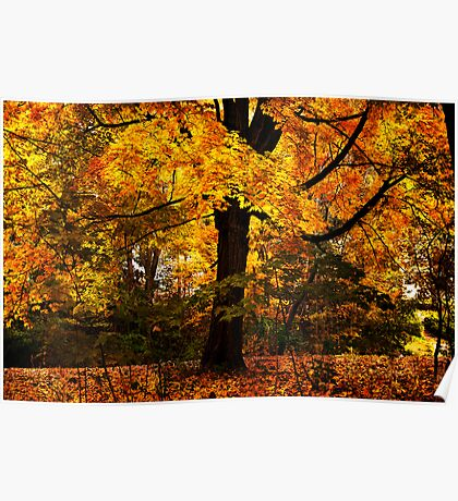 New England Maple Poster