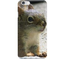 Crumbs on my Whiskers iPhone Case/Skin