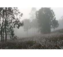 Misty Morning. Photographic Print