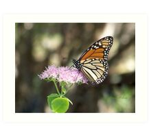Monarch Stopping By  Art Print