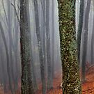 Lost in the misty forest by Hercules Milas
