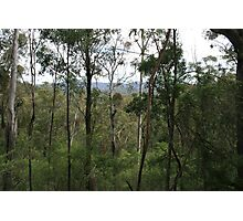 Nerrigundah in Dampier State Forest, NSW Photographic Print