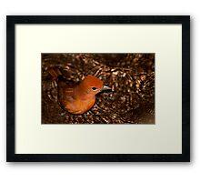 Red Bird! Framed Print