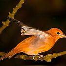 Red flapper! by vasu