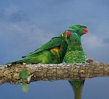 Parrot Love by byronbackyard