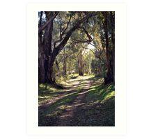 A walk in the Bush Art Print