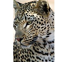 Maxabene 3:3 Young Male Leopard Photographic Print