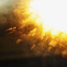 bokeh sunrise by Lillian Collins