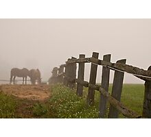 Misty Morning On The Farm Photographic Print
